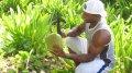 Вот так, при помощи мачете, местные доминиканцы добывают кокосовый сок (кокосовую воду) из кокоса. Не надо путать кокосовый сок и кокосовое молоко: сок - это натуральная жидкость, которая сама образуется внутри кокоса, а молоко - это сладкая, молочно-белая жидкость, полученная из мякоти созревшего кокоса.